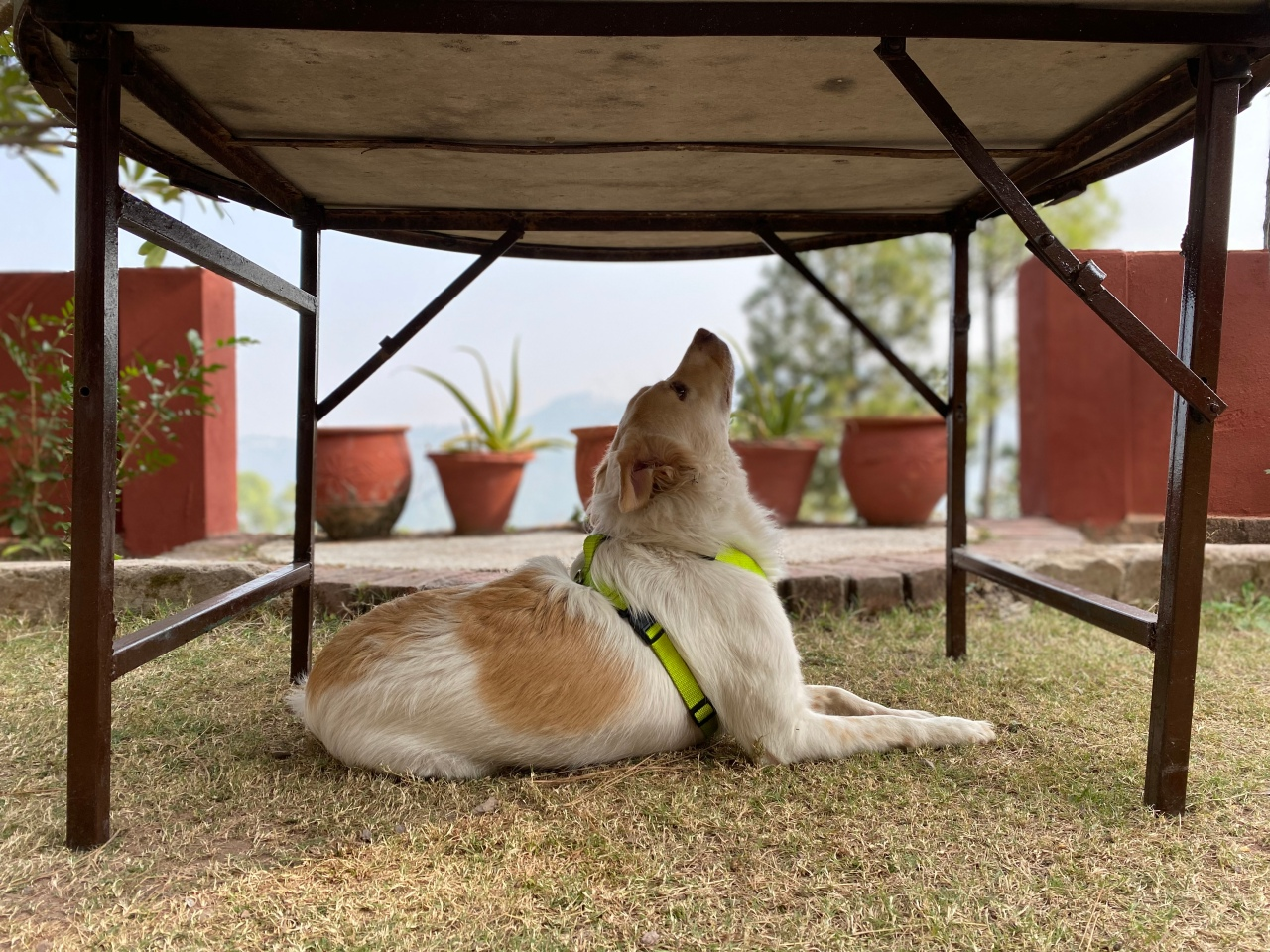 Road-Tripping with Pet inIndia